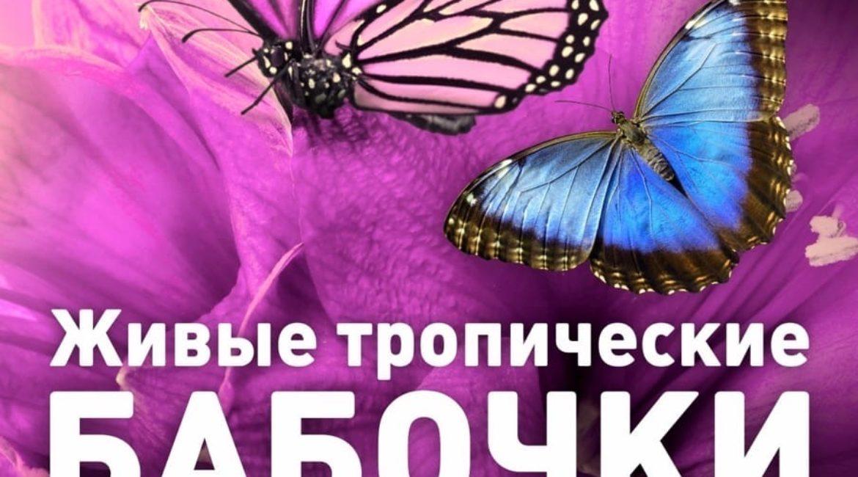 Выставка бабочек, 1-20 декабря, МОЛЛ Матрица